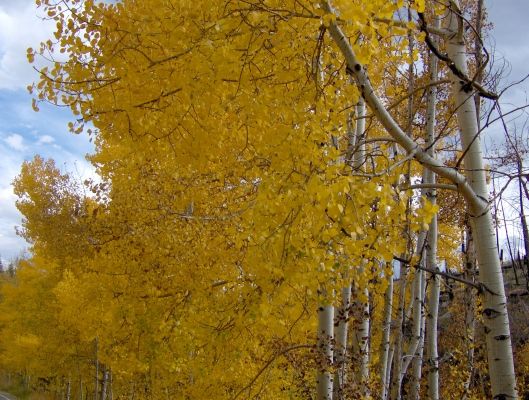 Fall Colorado